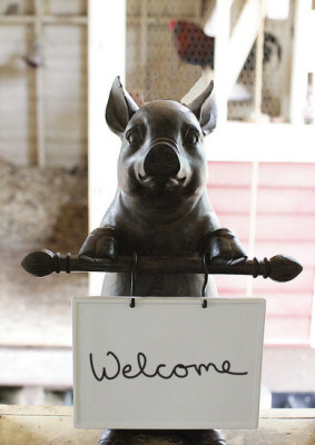 Pig Holding Sign