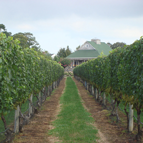 CoreyCreekVineyards